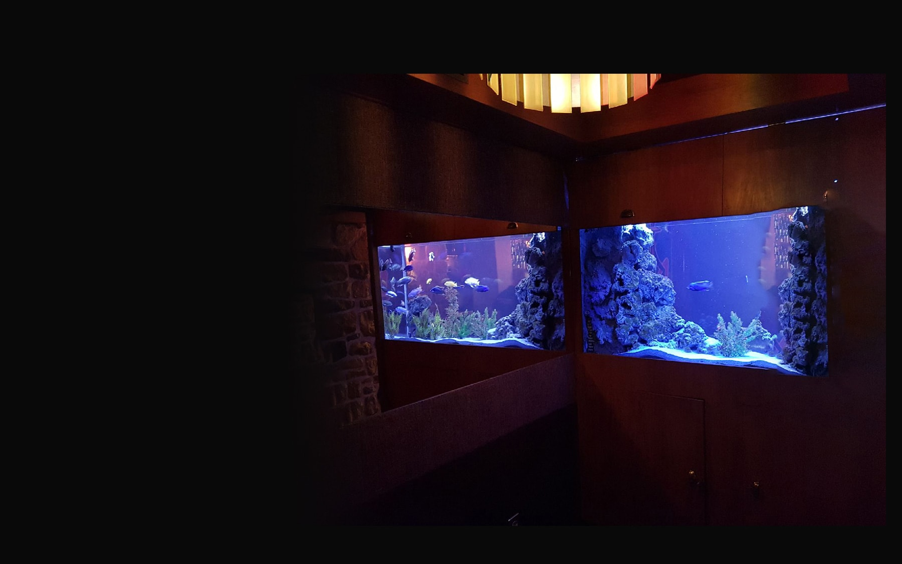 aquarium paris by night aqua art design. Black Bedroom Furniture Sets. Home Design Ideas