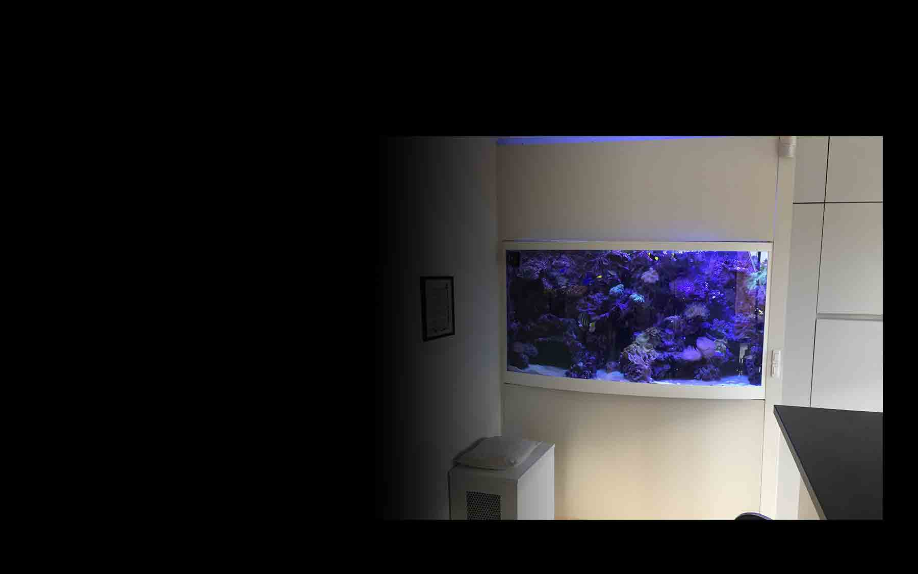 aquarium cape maclear aqua art design. Black Bedroom Furniture Sets. Home Design Ideas